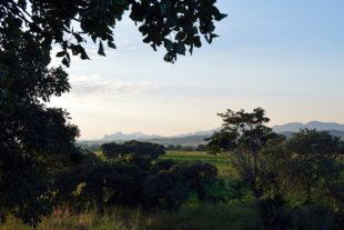 Sochařská komunita Tengenenge v Zimbabwe